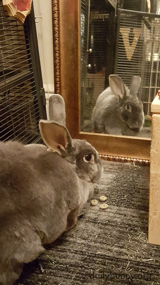 Bunny Admires Her Reflection