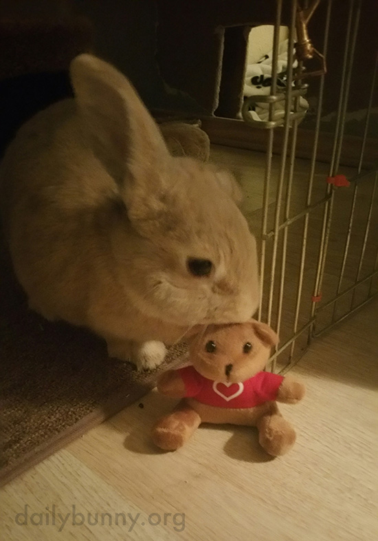 Bunny Gives His Teddy a Kiss
