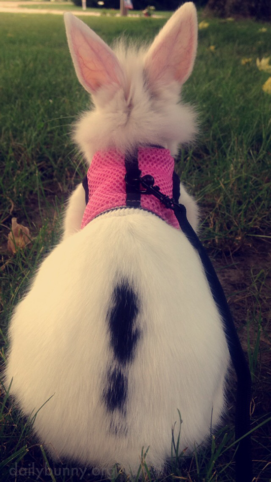 Bunny Imagines All the Romping She Can Do Here