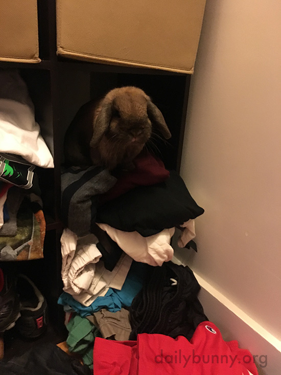 Bunny Might Be Claiming This Cubby from Human's Clothes