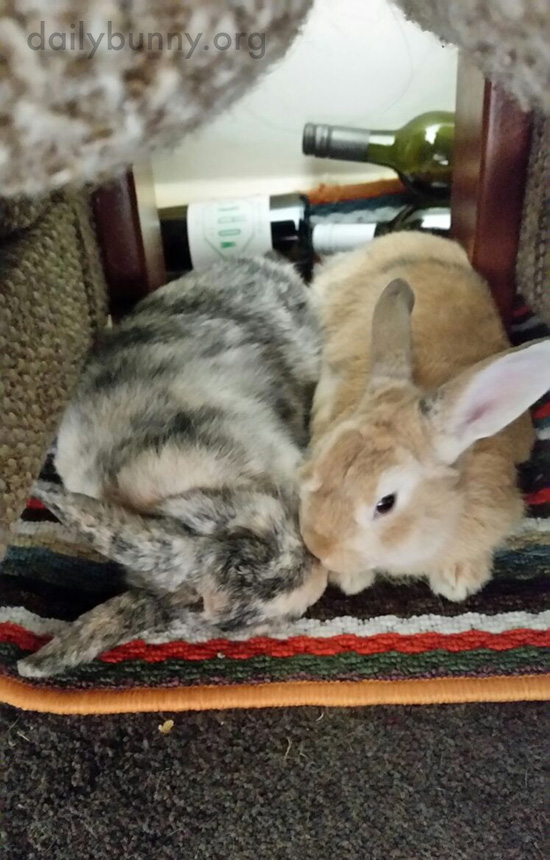 Bunnies Have a Cuddle and a Smooch