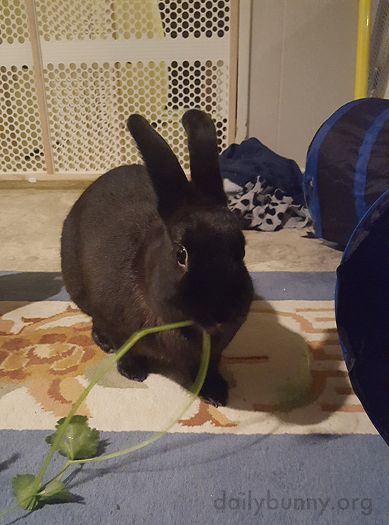 Bunnies Make Their Snacks Disappear 1
