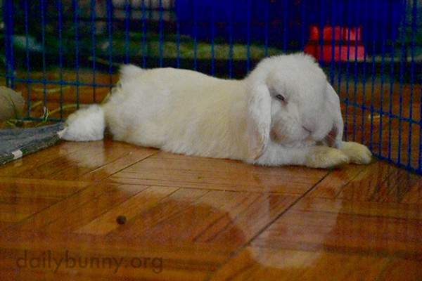 Bunny Can Admire His Reflection in the Floor