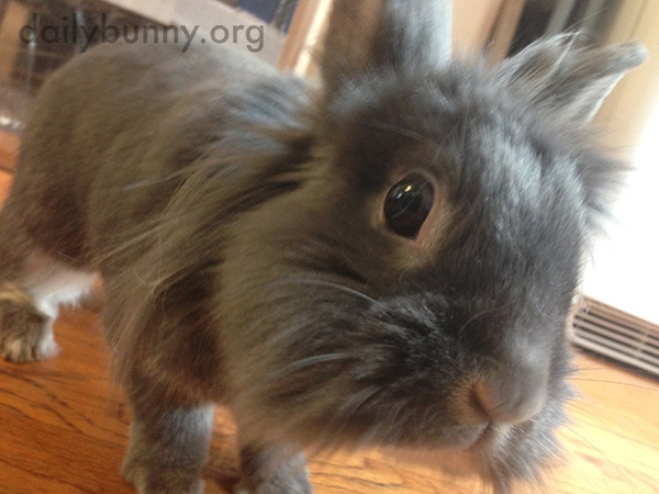 Bunny Is So Curious About the Camera!