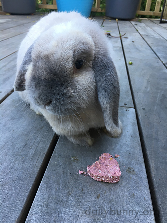 Bunny Nibbles a Special Treat