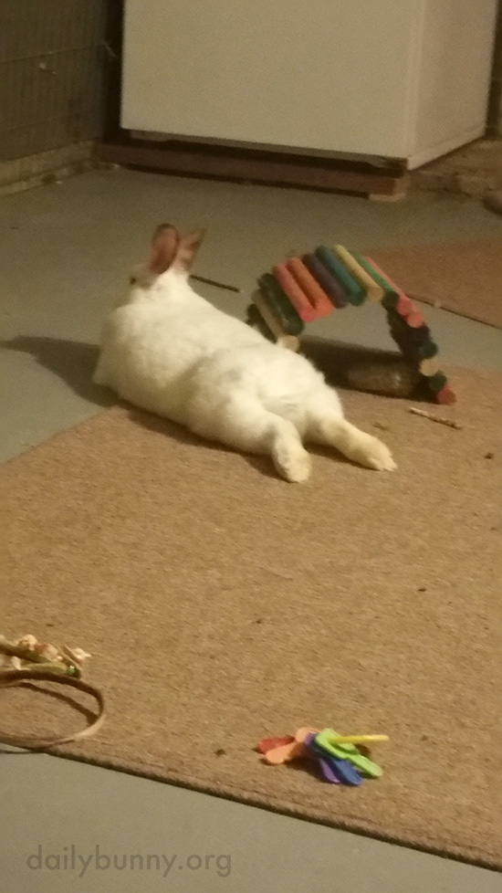 Bunny Relaxes Next to Her Tunnel 2