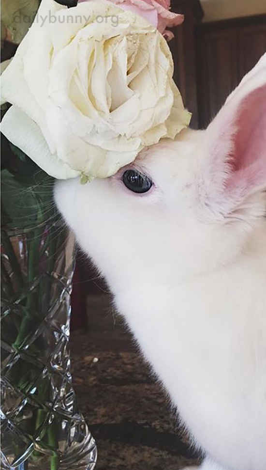 Bunny Sniffs and Models the Flowers 1