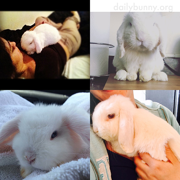 Bunny's Birthday Collage
