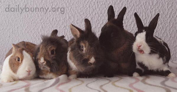 Bunnies Line Up for a Photo... and a Yawn