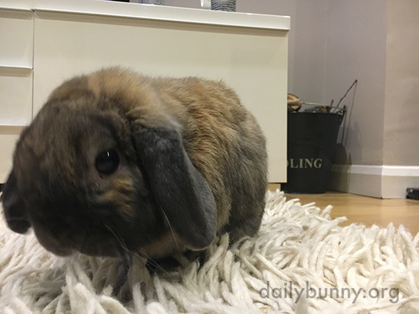 Bunny, Are You Up to Something or Just Looking for a Little Quiet?