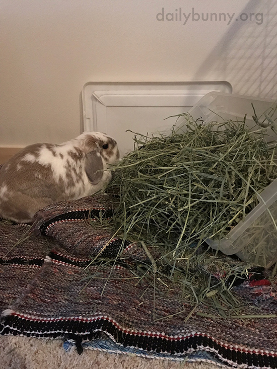 Hay Is Tastier When You Make a Mess Eating It 1