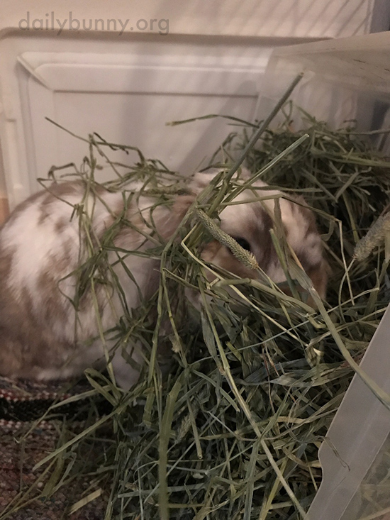Hay Is Tastier When You Make a Mess Eating It 3