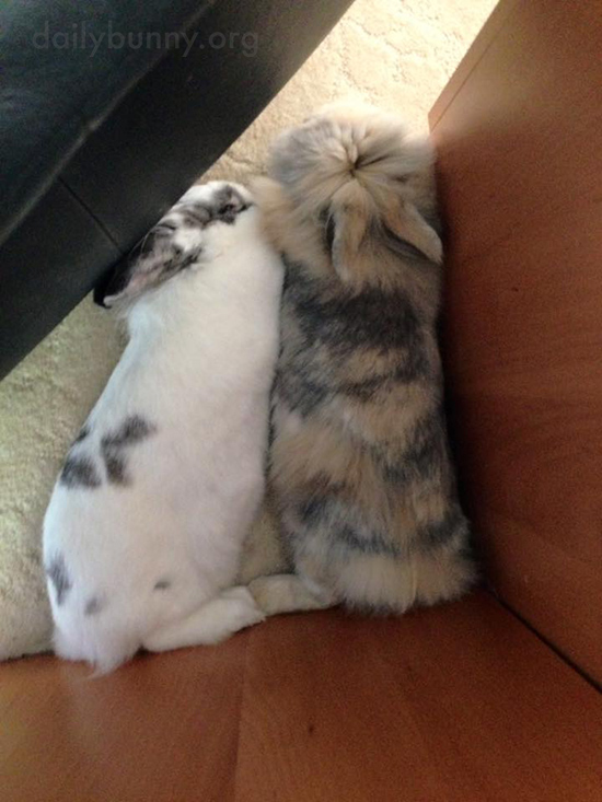 Bunnies Relax Together in a Quiet Corner