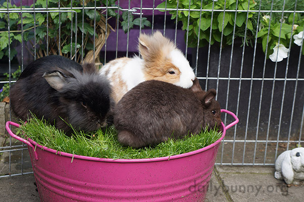 Bunnies Share a Delicious Grassy Snack