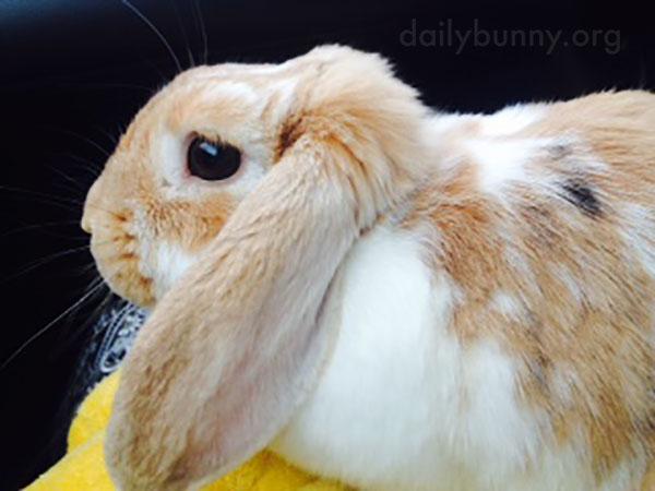 Bunny Fur Looks Sooo Soft