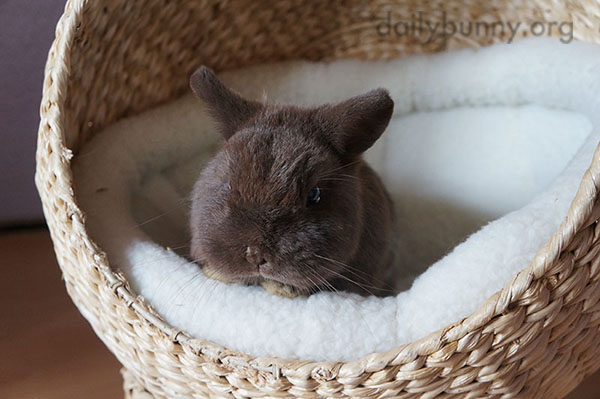 Bunny Sits in a Cozy Basket