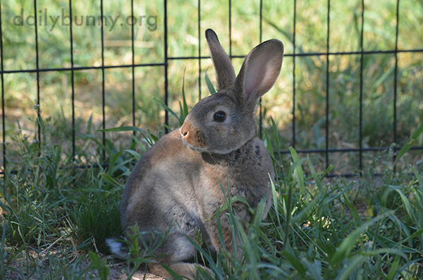 Bunny Pauses His Romp for a Lovely Portrait