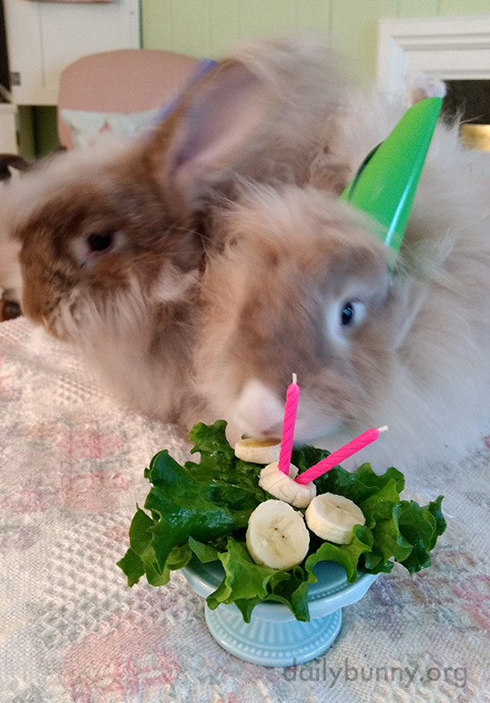 Bunnies Celebrate a Birthday with Banana Slices 2