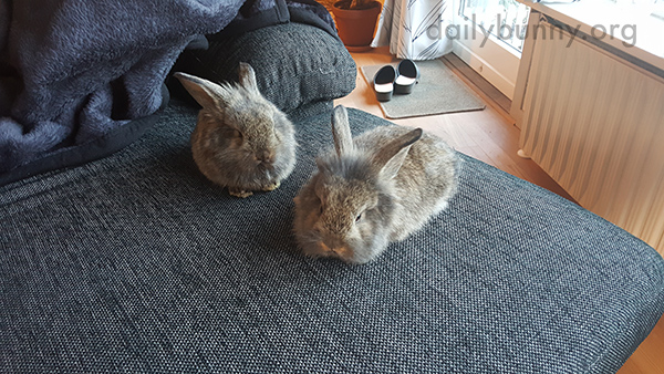 Bunnies Are Little Loaves with Big Ears 1