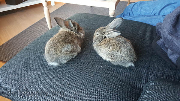 Bunnies Are Little Loaves with Big Ears 2