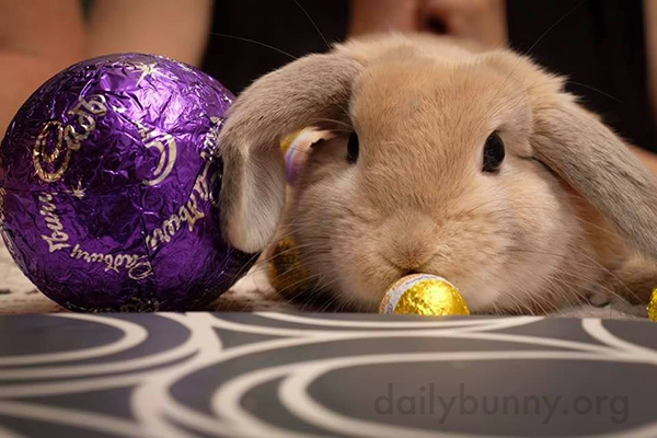 It's the Daily Bunny's Easter 2017 Post! 1