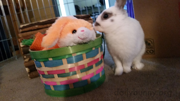 It's the Daily Bunny's Easter 2017 Post! 4