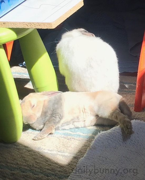 Bunnies Warm Up in the Sun for Some Napping and Grooming