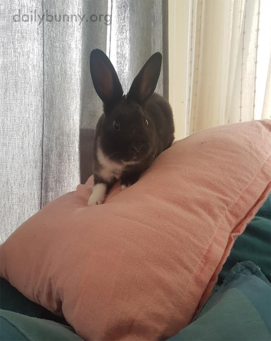 Bunny Goes Pillow Climbing