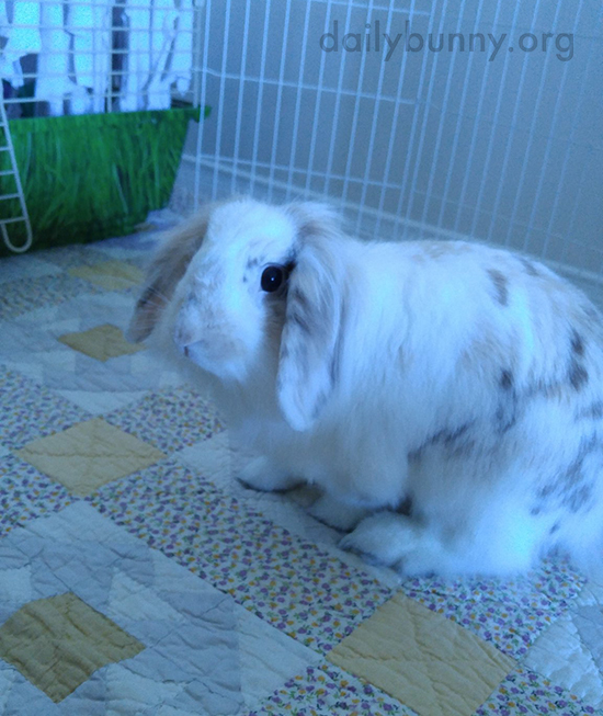 Bunny Has an Inquisitive Look