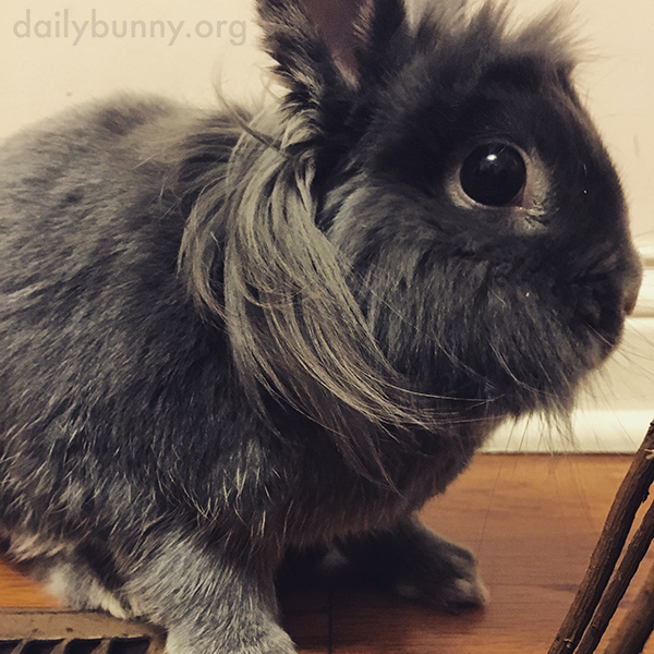 Bunny's Fur Is Business in the Front, Party in the Back