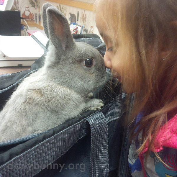 Bunny Has His Small Human to Comfort Him at the Vet