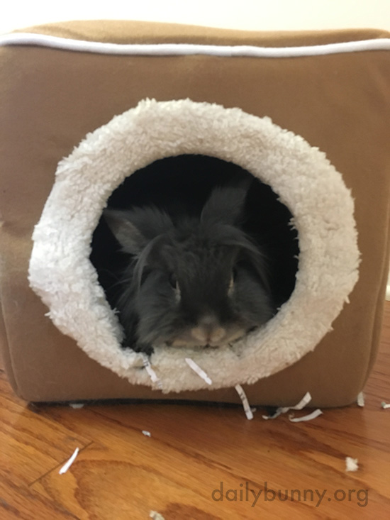 Bunny Hangs Out in a Cozy Cube