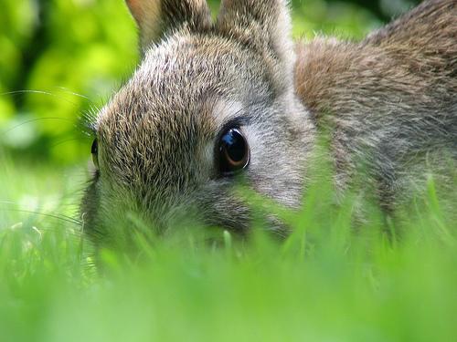 2008, 7-20 Daily Bunny