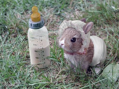 2008, 7-22 Daily Bunny
