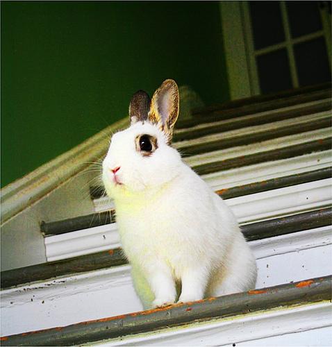 2008, 7-24 Daily Bunny