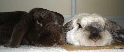 2008, 7-25 Daily Bunny