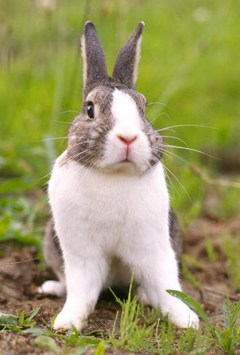 2008, 7-18 Daily Bunny