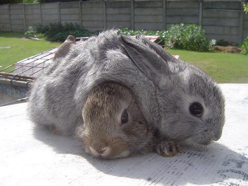 2008, 7-30 Daily Bunny