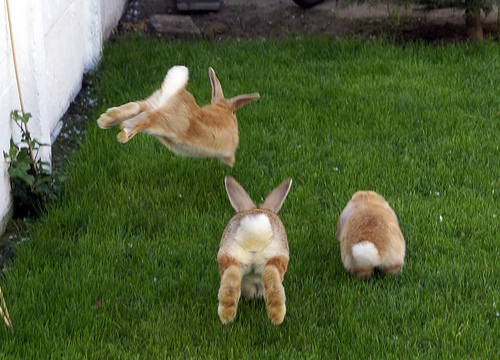 2008, 7-30 Daily Bunny.2