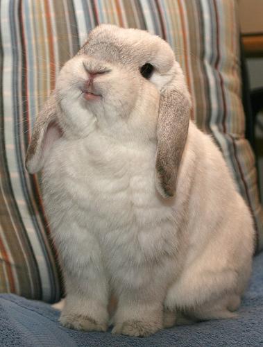 2008, 7-31 Daily Bunny