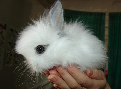 2008, 8-1 Daily Bunny