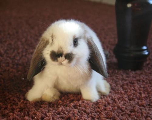 2008, 8-6 Daily Bunny