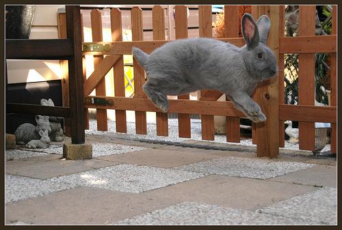 2008, 8-14 Daily Bunny.2