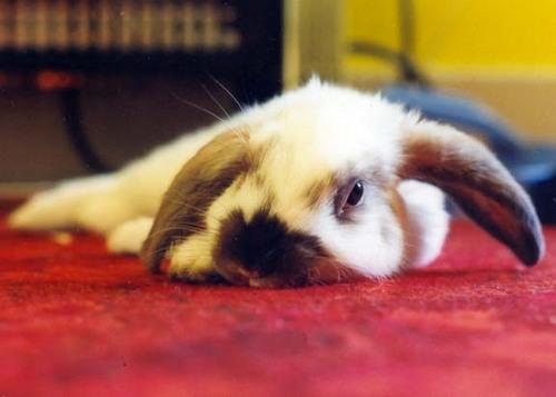 2008, 8-20 Daily Bunny