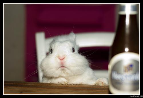 2008, 8-23 Daily Bunny