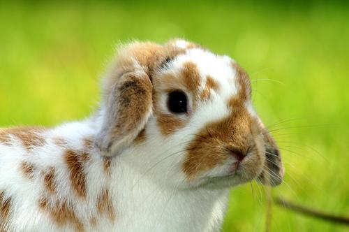 2008, 8-24 Daily Bunny.2