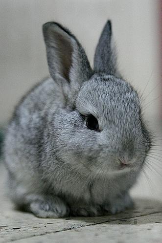 2008, 8-25 Daily Bunny