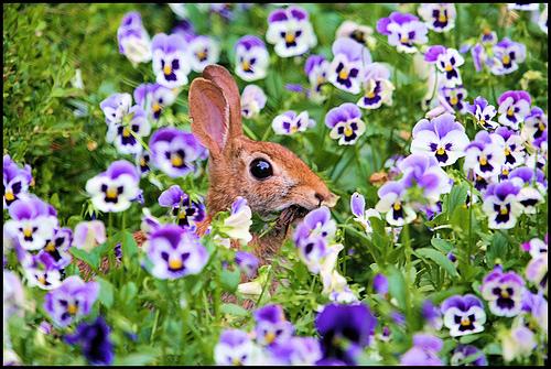 2008, 8-26 Daily Bunny