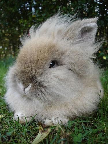 2008, 8-29 Daily Bunny.2