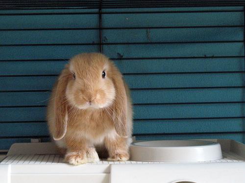 2008, 8-29 Daily Bunny.3